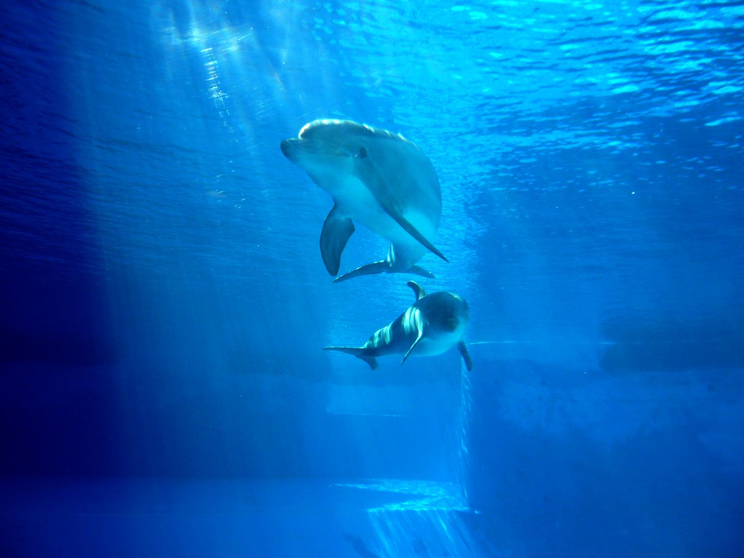 Laguna dei Delfini