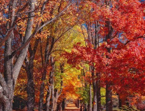 Ricominciamo dall'autunno
